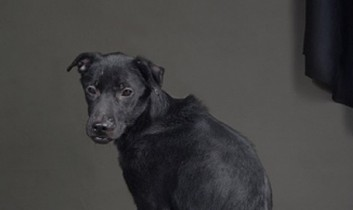 """Photographing Dogs' Last Moments: """"I hope the images can inspire people to take action."""""""