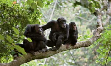 """Film Analysis: """"Rise of the Planet of the Apes"""""""