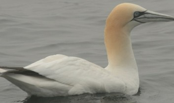 PATH Says Wildlife Damage in the Gulf is Much Bigger Than BP Will Admit
