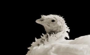 Seeing Elderly Animals Through a Photographer's Lens