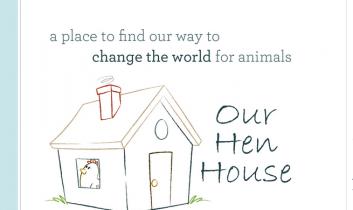 Choosing Raw: Talking GI Health On Our Hen House