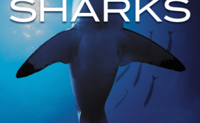 "Book Review: ""Jeff Corwin's Explorer Series: Sharks"""