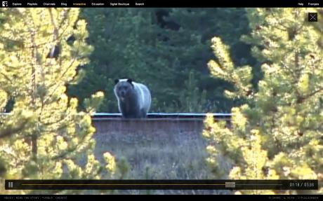 Bear71_Screen Shot 2013-01-12 at 12.16.47