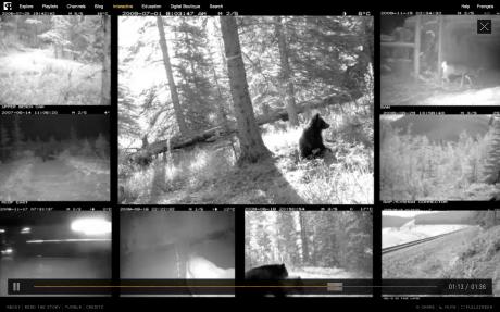 Little_bear_Screen Shot 2013-01-12 at 12.16.41