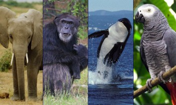 The Long Road to Legal Personhood for Nonhuman Animals