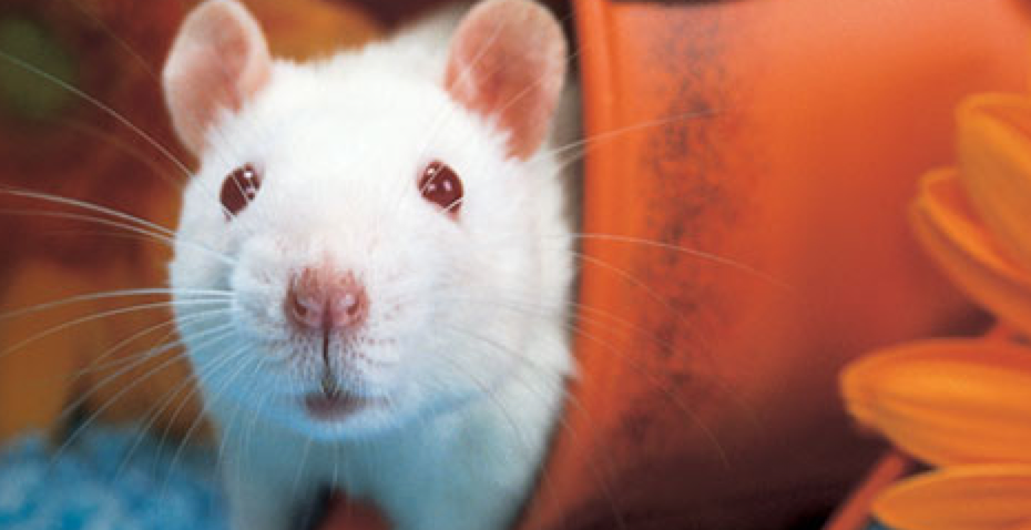 How to Argue Against Vivisection in the 21st Century (by Ray Greek, M.D.)
