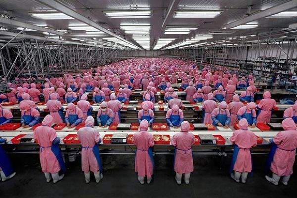 History Is Bunk? Animal Rights and the End of the Assembly Line
