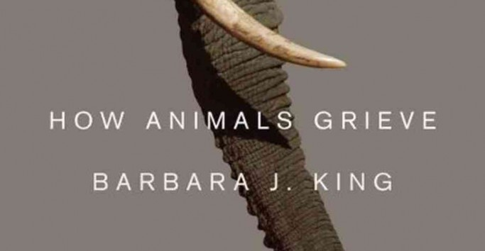 book review animal dreams by barbara A site dedicated to book lovers providing a forum to discover and share commentary about the books and authors they enjoy author interviews, book reviews and lively book commentary are found here.
