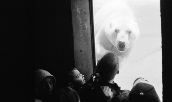 "The Question of the Animal: Excerpt from ""The Polar Bear in the Zoo: A Speculation"" by Martin Rowe"