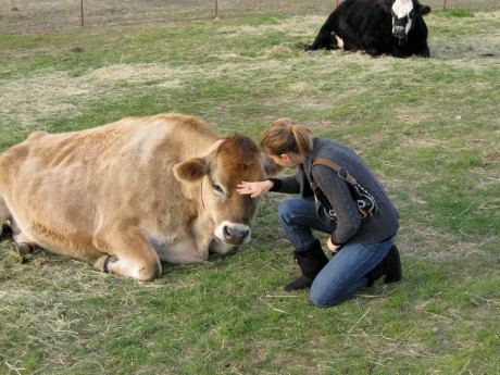 Lea and Mario, at Farm Sanctuary in Acton, Calif. Mario was discovered on top of a dairy farm's dead pile, helpless and with a broken leg, before eventually making his way to Farm Sanctuary.