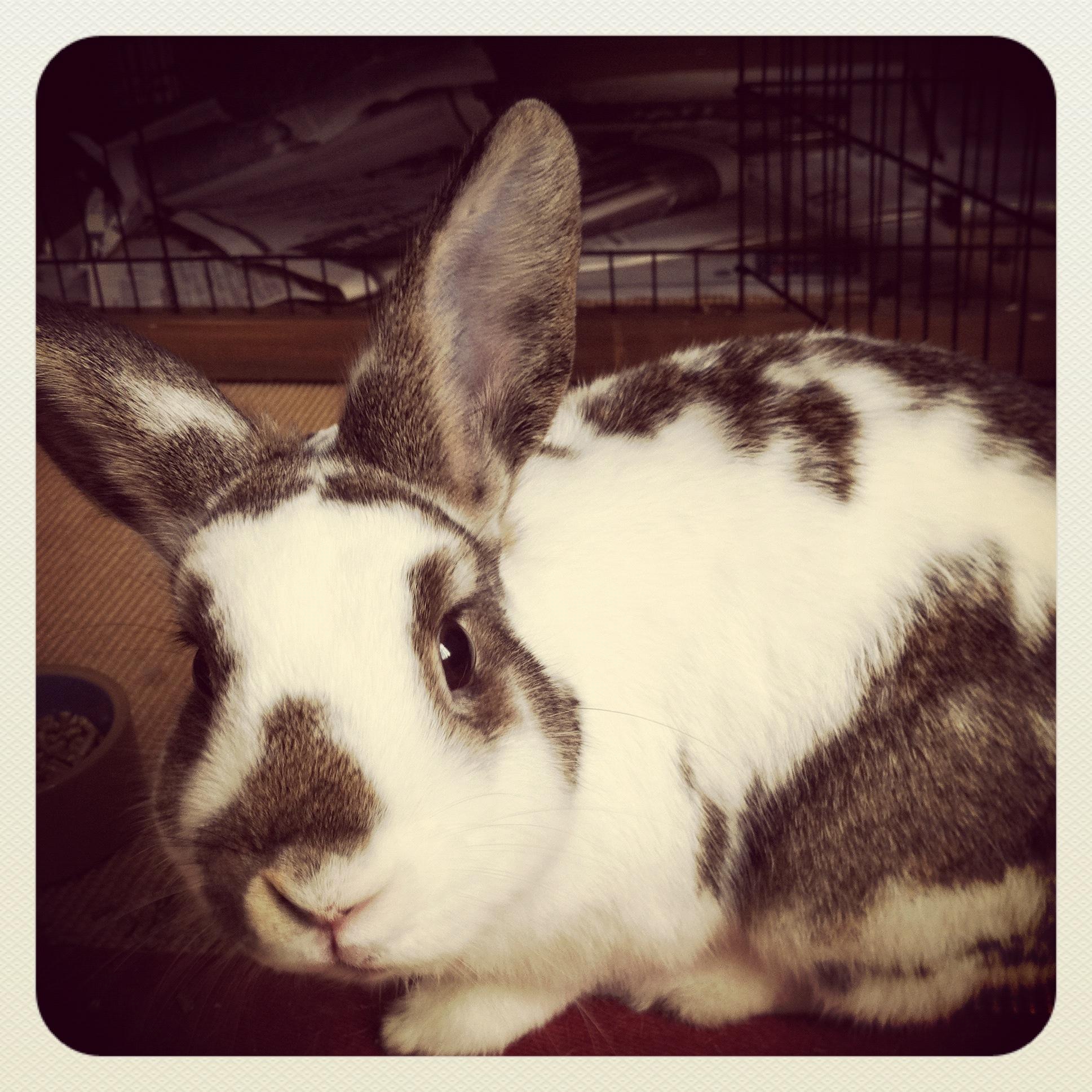 BoBo the Bunny Says Hello