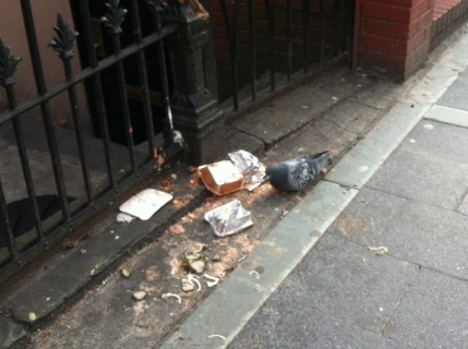 One Man's Trash Is This Pigeon's Delight