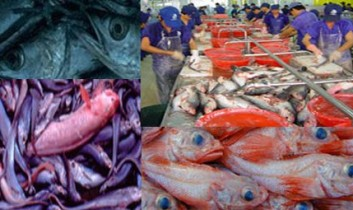 Why Fish? Speaking Up for Earth's Aquatic Residents