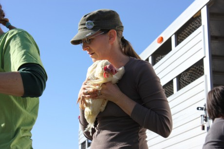 hope-and-rescue-chicken