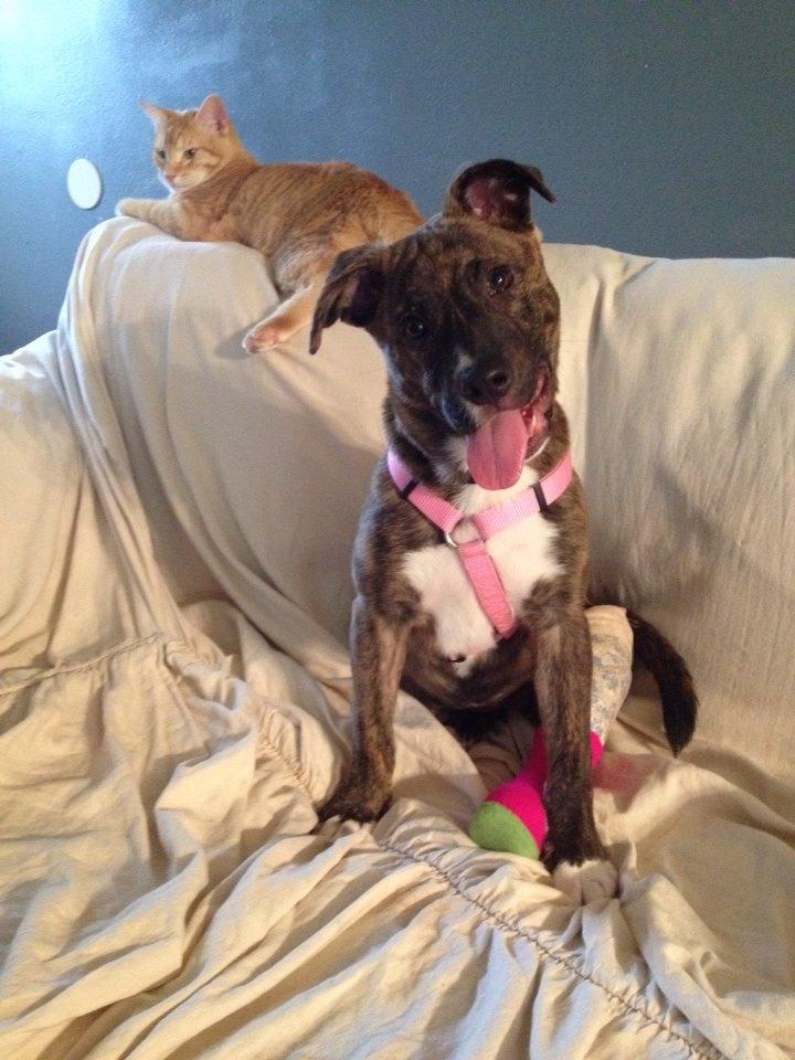 Foster Puppy Pippa