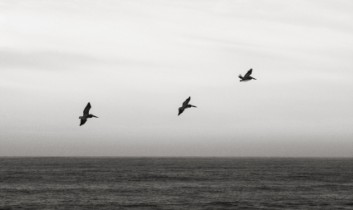 """Flock Only: Why We Should Never Say """"Not In My Lifetime…"""" (Plus a Bonus Giveaway: """"Comfortably Yum"""" by Allison Rivers Samson)"""