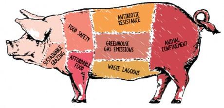 Pig-Logo-No-Title