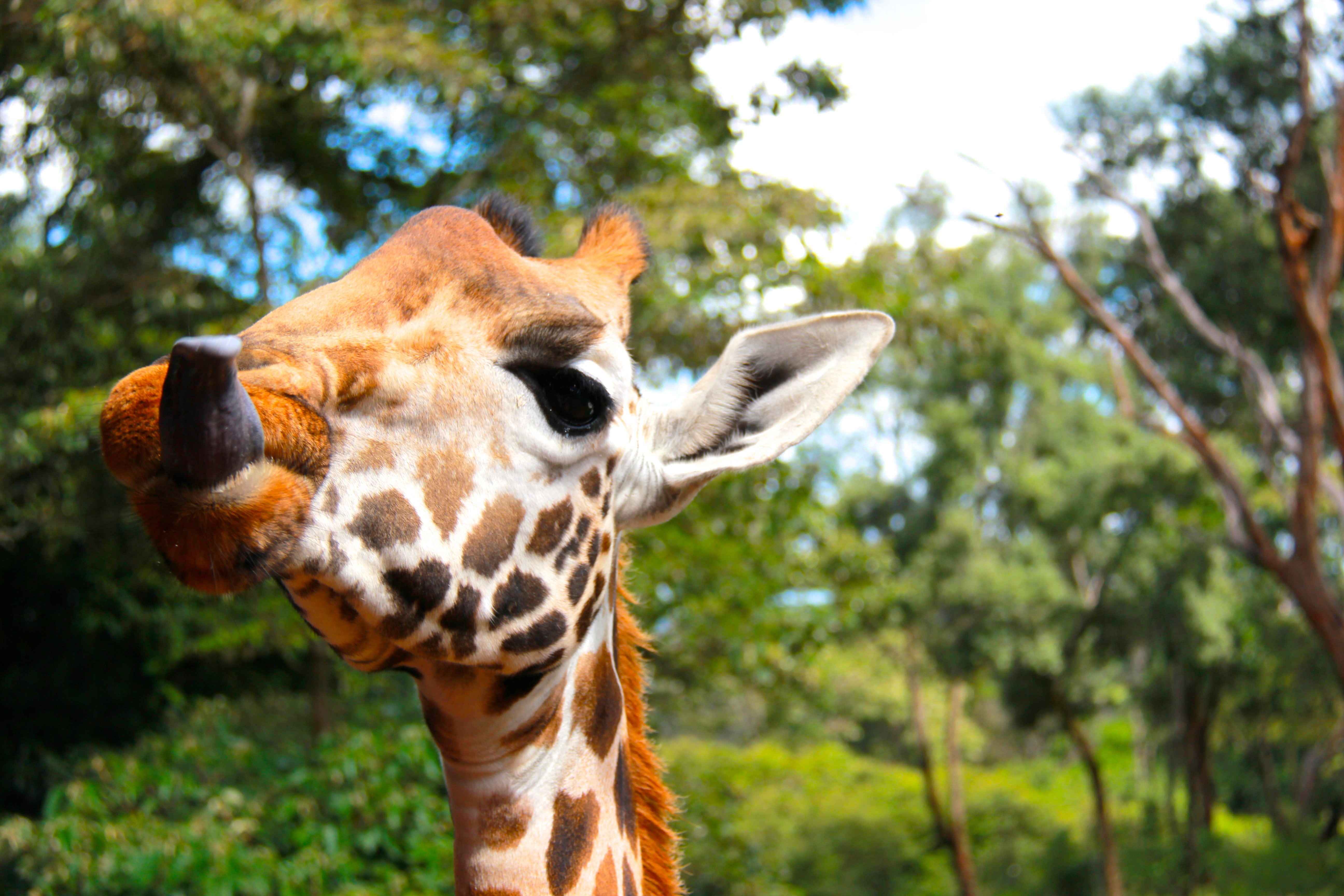 Animal Lawyers Without Borders: Why I Followed My Heart and My Name to Kenya for Animals