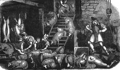 1839 animals friend image