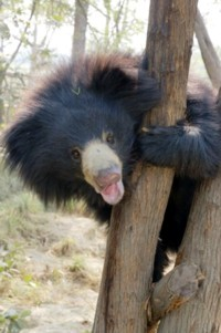 bear3