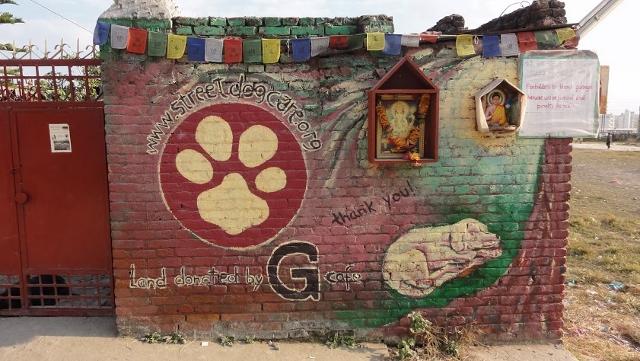 Street Dog Care of Kathmandu, Nepal