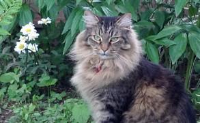 Spuddie in his cat yard