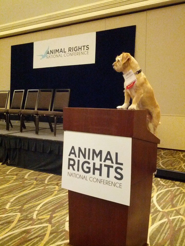 the characteristics of the animal rights movement Indicate that the animal rights movement has been expanding over recent years   was characteristic of european animal welfare activists throughout the.