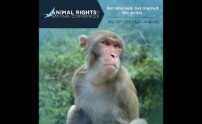 Animal Rights Conference 2014 – Three Perspectives