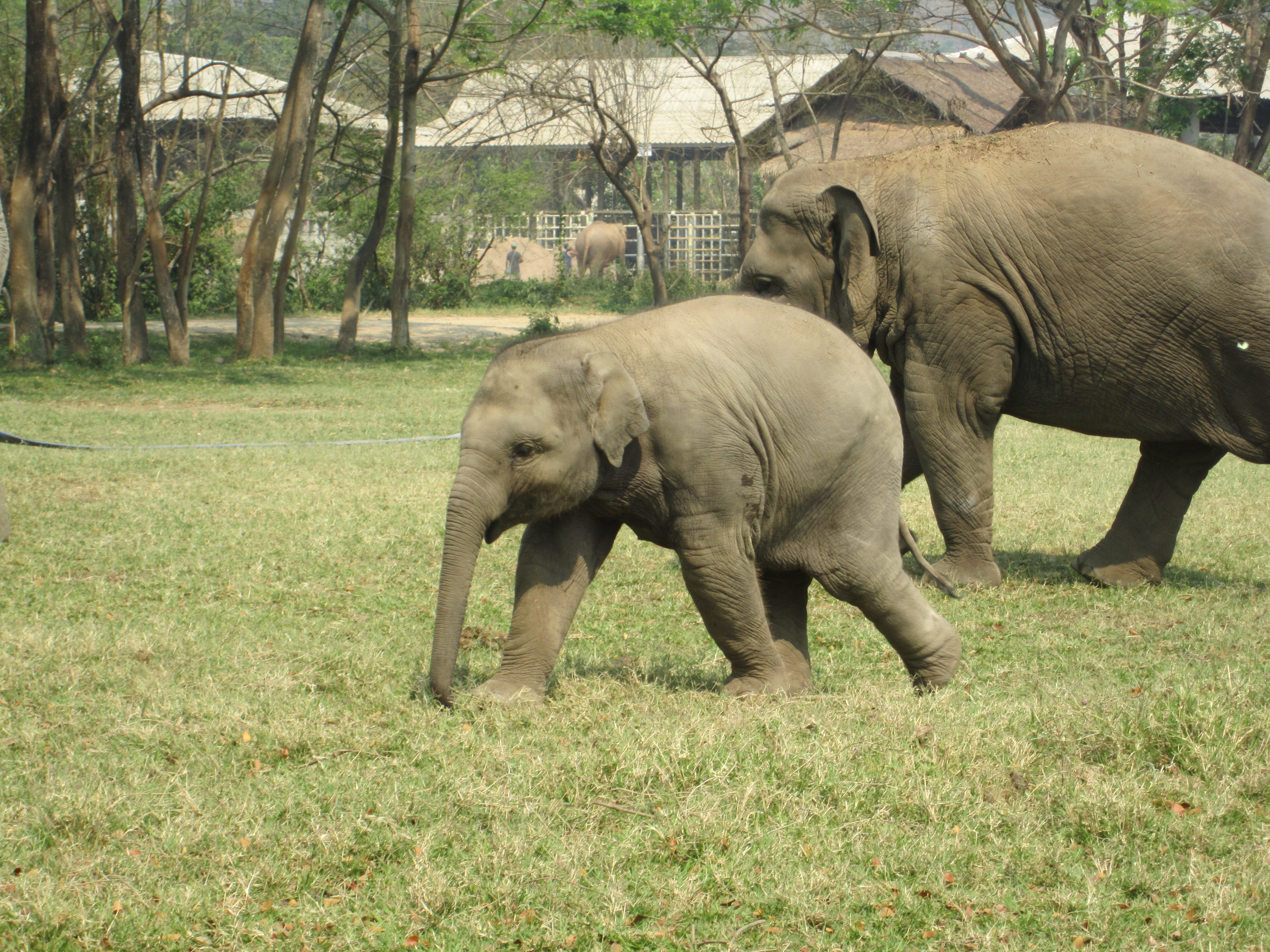 A Transformative Trip to the Elephant Nature Park in Thailand