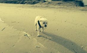 Lea as a salty sea dog.