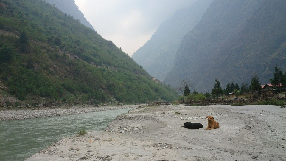 Himalayan Mutts Go To Neutering Camps