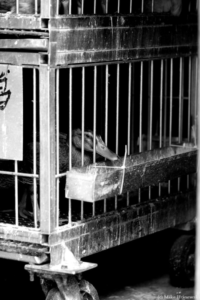 animal abuse is cruel and inhumane essay What is it that causes one human being to be horribly cruel to  how do you explain human cruelty  without descending into drugs/alcohol abuse or by damaging.