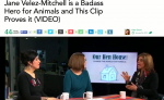 """Jane Velez-Mitchell is a Badass Hero for Animals and This Clip Proves It"" from One Green Planet"