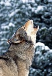 Lives in the Balance: The Federal Government's Clandestine War on Wildlife