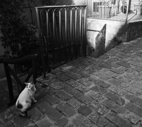 This is a photo of a cute cat that Jasmin took on her recent vegan tour of Italy.