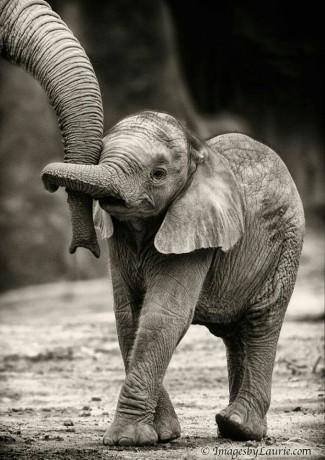 Photo via National Elephant Appreciation Day Facebook page.