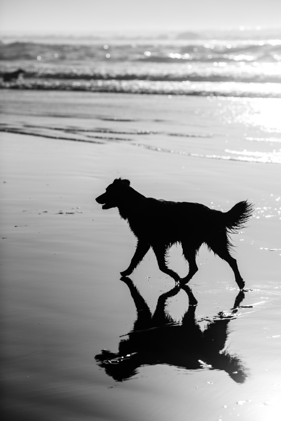 Dog-Silhouette-and-Reflection-000066465775_Small